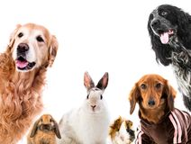 Group of cute fluffy animals stock image