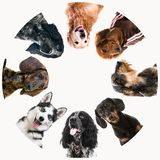 Group of cute fluffy dogs stock photography