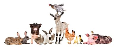 Group of cute funny farm animals together