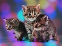 Group of cute little kittens. Studio shot royalty free stock photos