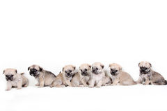 Group of cute puppies on white background Stock Images