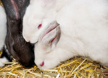 Group of  cute rabbits. Stock Photos