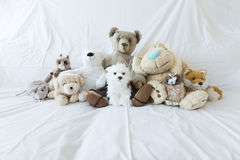 Group of cute stuffed animals on a white couch. A group of cute stuffed animals on a white couch representing diversity, multiculturalism and inclusion stock photos