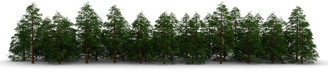 Group of cypress trees Royalty Free Stock Photo
