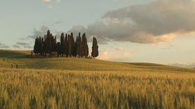 Group of cypress trees at dusk with the fields turning orange. Group of cypress tree in tuscan landscape of the val d'orcia as the sun starts to set turning the stock video