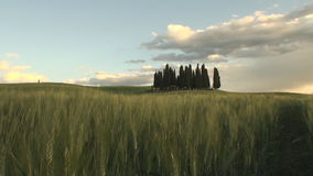 Group of cypress trees at dusk with the fields turning orange Royalty Free Stock Photography