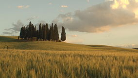 Group of cypress trees at dusk. Pan of a group of cypress tree in Tuscan landscape of the Val d'Orcia as the sun starts to set stock video footage