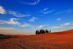 Group of Cypresses. A group of cypresses in front of an almost artistically shaped cloudy sky Royalty Free Stock Image
