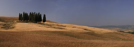 Group of cypresses. A group of cypresses close to Siena Royalty Free Stock Images
