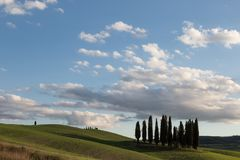 An  group of cypresses on a green hill in Tuscany Italy. Under a big blue sky with white clouds. Typical Tuscany landscape Stock Images