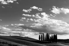 An  group of cypresses on a hill in Tuscany Italy, und. Er a big sky with white clouds. Typical Tuscany landscape Stock Photography