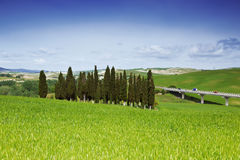Group of cypresses, Tuscany Stock Images