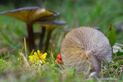 Group dark mushrooms royalty free stock images