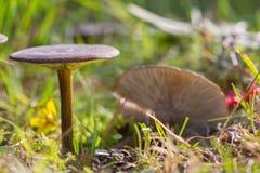 Group dark mushrooms royalty free stock image