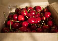 Dark red cherries in a day Stock Photography