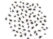 Group of dead flies, isolated. On white stock image