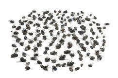 Group of dead flies, isolated Royalty Free Stock Photos