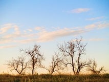 Group of dead trees. On a top of the hill sky background royalty free stock photography