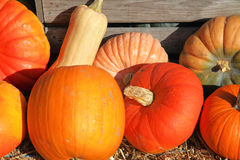 Group of decorative pumpkins Royalty Free Stock Photo