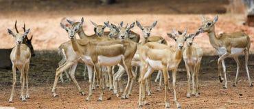 Group of deer Stock Photos