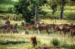 Group of Deer on Green Field at Daytime Stock Photos