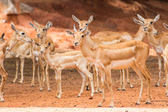 Group of deer in nature Stock Photo