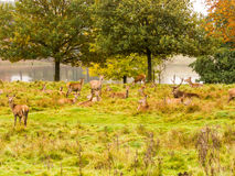 Group of deer Royalty Free Stock Photography