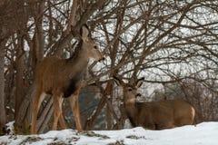 group of deer royalty free stock photos