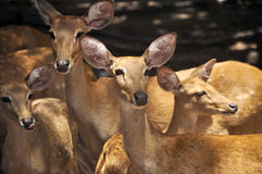 Group of deer Stock Photo