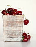 Group of delicious cherries Royalty Free Stock Image