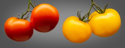 Group of red tomatoes isolated on grey background Royalty Free Stock Image