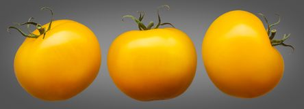 Group of yellow tomatoes isolated on grey Royalty Free Stock Photos
