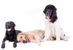 Group of different breed dog in front of white background Royalty Free Stock Images