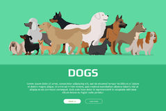Group of Different Breeds Dogs. Royalty Free Stock Photos