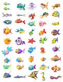 Group of different fishes Stock Image