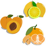 Group of different fruit, vector flat. Fruit, group, orange, mandarin, lemon, peach, apricot, slice, nature, leaf, natural, object, vitamin, organic, health Royalty Free Stock Photo