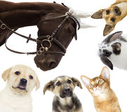 Group of different pets Royalty Free Stock Photos