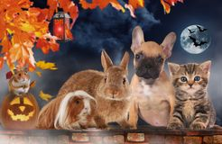A group of different pets on halloween Royalty Free Stock Photos