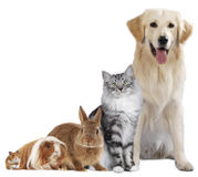 Group of different pets Royalty Free Stock Image