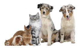 Group of different pets Stock Images