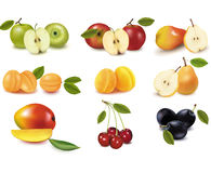 Group with different sorts of fruit. Vector Stock Photography