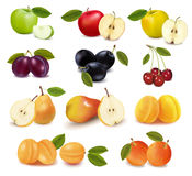 Group with different sorts of fruit. Royalty Free Stock Photography
