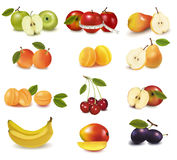 Group with different sorts of fruit. Vector. Illustration Royalty Free Stock Photo