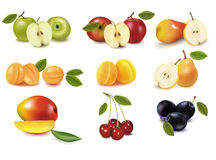 Group with different sorts of fruit. Vector. Stock Photography