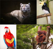 Group of different wild animal Royalty Free Stock Photography