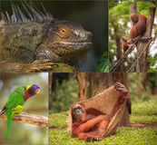 Group of different wild animal Stock Photos