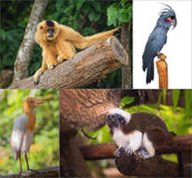 Group of different wild animal Stock Photo