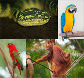 Group of different wild animal Royalty Free Stock Images