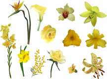 Group of different yellow flowers isolated on white Stock Photography