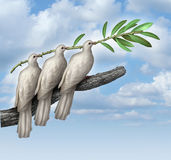 Group Diplomacy. As a concept of negotiated peace with three white doves working together in partnership and friendship holding an olive branch as a symbol of royalty free illustration